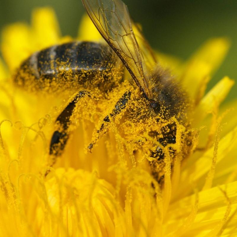 pollen de fleurs bio espagne biomiel and co. Black Bedroom Furniture Sets. Home Design Ideas