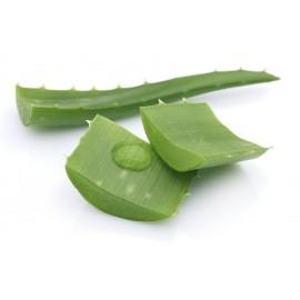 Gélules d'Aloe vera BIO