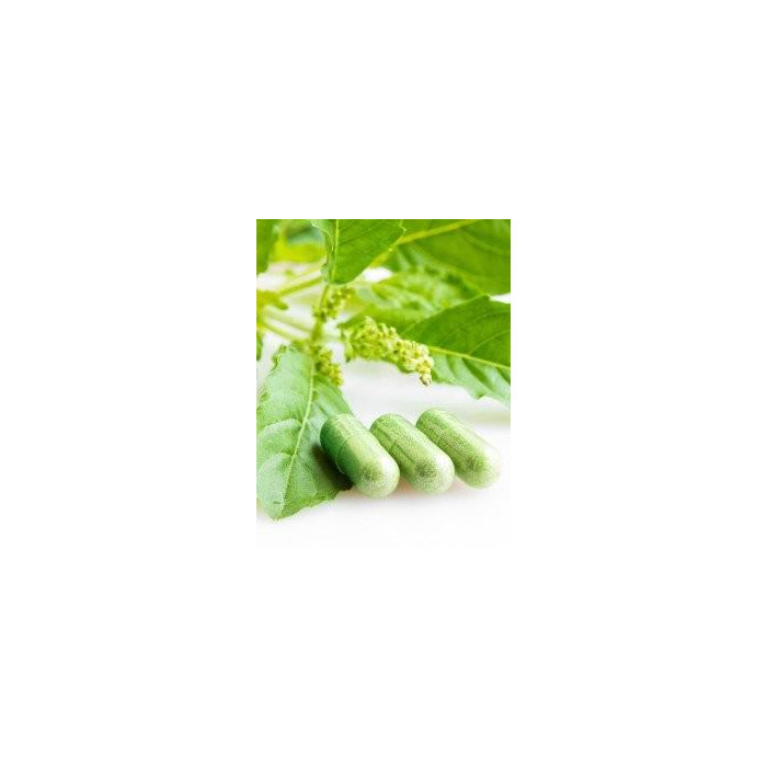 Gélules d'Artemisia Annua (armoise anuelle)