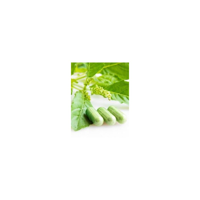 Gélules d'Artemisia Annua...