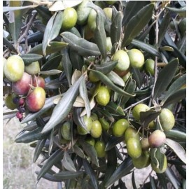 Huile d'olive luxe extra vierge d'italie